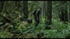 62.0_Aokigahara Forest photoMT