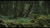 63.0_Aokigahara Forest photoMT