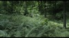 64.0_Aokigahara Forest photoMT